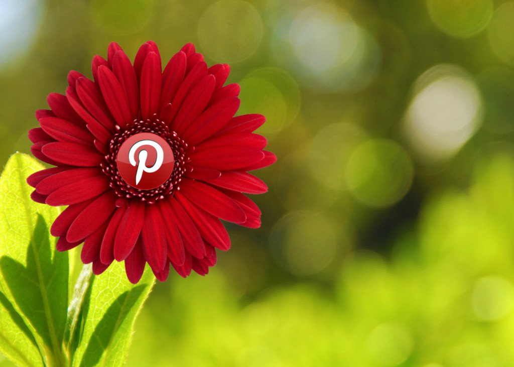 ¿Pinterest o Instagram? ¿Cuál es mejor para tu empresa?